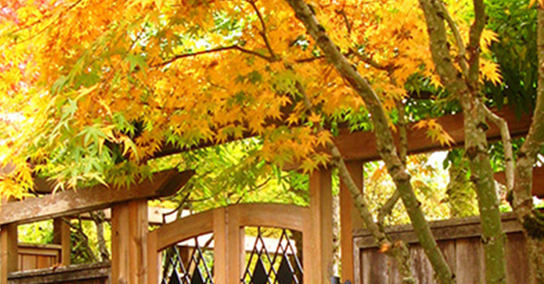 japanese maple gate
